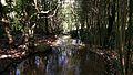 Streaming Water (25481024073).jpg