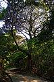 Sumoto Castle Awaji Island Japan12n.jpg