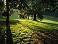 Sunlight at Cockington - geograph.org.uk - 812832.jpg