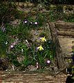 Sunny bed - Flickr - peganum (3).jpg
