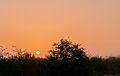Sunset in Margarita xerophytic.jpg