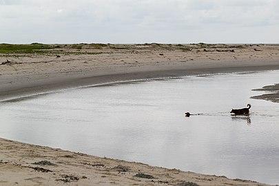 Superagui - Habitantes caninos.jpg