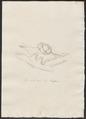 Sus scrofa domestica - geslachtsorganen - 1700-1880 - Print - Iconographia Zoologica - Special Collections University of Amsterdam - UBA01 IZ21900175.tif