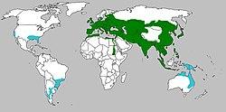 Distribuição geográfica do javali há alguns séculos (verde) e áreas em que a espécie foi introduzida como espécie exótica (azul).