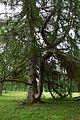 Suure-Kambja mõisa park.JPG