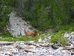Swiss National Park 185.JPG