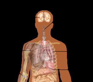 سرماخوردگی از آلودگی مجاری هوایی به ویروس آنفولانزا جلوگیری می کند