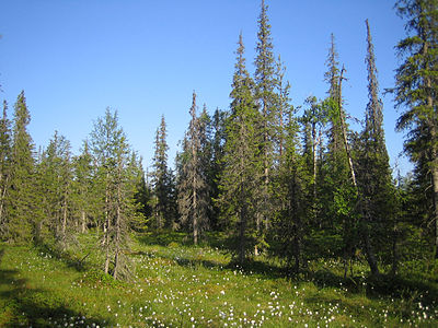 Syote National Park.jpg