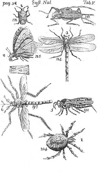 File:Systema Naturae Plate V.jpg