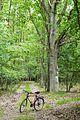 Szlak zielony Gleboczek Lopuchowo, Puszcza Zielonka.JPG