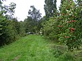 Tempting apples at Valley Farm, Tetworth - geograph.org.uk - 533043.jpg
