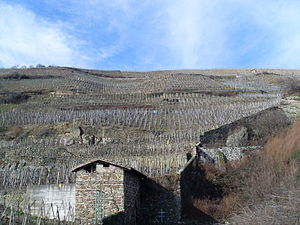 Terraces of vineyards in the French wine regio...