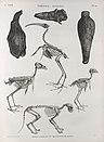 Thèbes. Hypogées. Momies d'oiseaux et squelettes de momies (NYPL b14212718-1267984).jpg