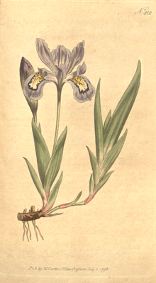 The Botanical Magazine, Plate 412 (Volume 12, 1798).png