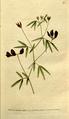 The Botanical Magazine, Plate 79 (Volume 3, 1790).png