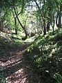The Dingle - woodland walk at Birch Hill Caravan Club CL - geograph.org.uk - 692297.jpg