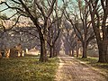 The Hermitage plantation, Savannah, Georgia, 1900.jpg