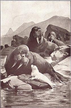 The Jungle Book by David Ljungdahl image 04