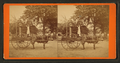 The Lightning Express, or the Team of a Florida Cracker, from Robert N. Dennis collection of stereoscopic views.png