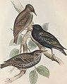 The birds of Europe (1837) (14728982806).jpg