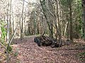 The remains of an old lorry in Coed y Faenol-Vaynol Woods - geograph.org.uk - 359256.jpg