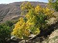 The smell of fall, Ira village, Lavasanat, Tehran, Iran رنگ پاییزی، روستای ایرا، لواسانات تهران - panoramio.jpg