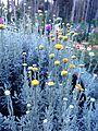 Tiny flowers1.jpg