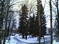 Tiurinlinnanraitti - panoramio (1).jpg