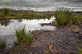 Totes Moor peat exploitation landscape Germany 01.jpg