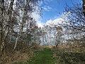 Towards the eastern edge of Holme Fen - April 2016 - panoramio.jpg
