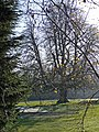 Tree, Golf Course, Old Park Avenue, Enfield - geograph.org.uk - 1074928.jpg