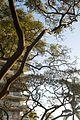 Tree (4596885281).jpg