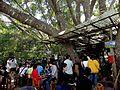 Tree house cafe - panoramio (2).jpg