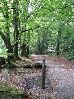 Tree lined footpath to Golitha Falls - geograph.org.uk - 2100974