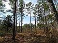 Trees, Jordan Lake SP NC 1477 (5487267490).jpg