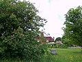 Trees, Lickfold - geograph.org.uk - 1342037.jpg