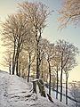Trees at High Birks (4369604669).jpg