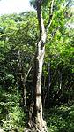 Tronco de un árbol.JPG