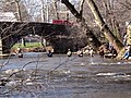Trout Fishing, Yellow Breeches Creek, Boiling Springs, PA.jpg