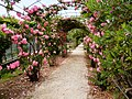 Tunnel di rose.jpg