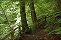 Two paths in Glenoe glen - geograph.org.uk - 477073.jpg