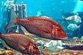 Unidentified fish6.JPG