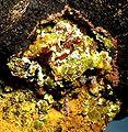Uranophane-Baryte-160539.jpg