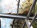 Verstopfte Regenrinne, Dach der Fahrrad-Abstellanlage, Nord-Seite des Bahnhofs Düren, 4.10.2014. Zustand bis 16.4.2016 unverändert. - panoramio.jpg