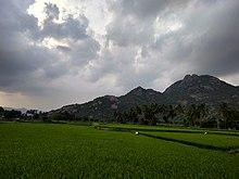 View of Kalvarayan Hills from Arasampattu.jpg