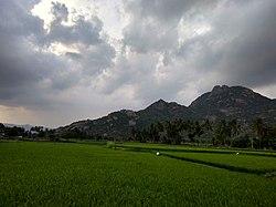 View of Kalvarayan Hills from Arasampattu.jpg