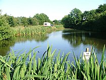 Village Pond, Seamer.jpg