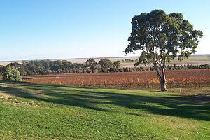 Limestone Coast - View across the plains near Naracoorte from Russet Ridge Winery