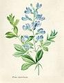 Vintage Flower illustration by Pierre-Joseph Redouté, digitally enhanced by rawpixel 20.jpg