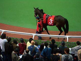 Viva Pataca British-bred Thoroughbred racehorse
